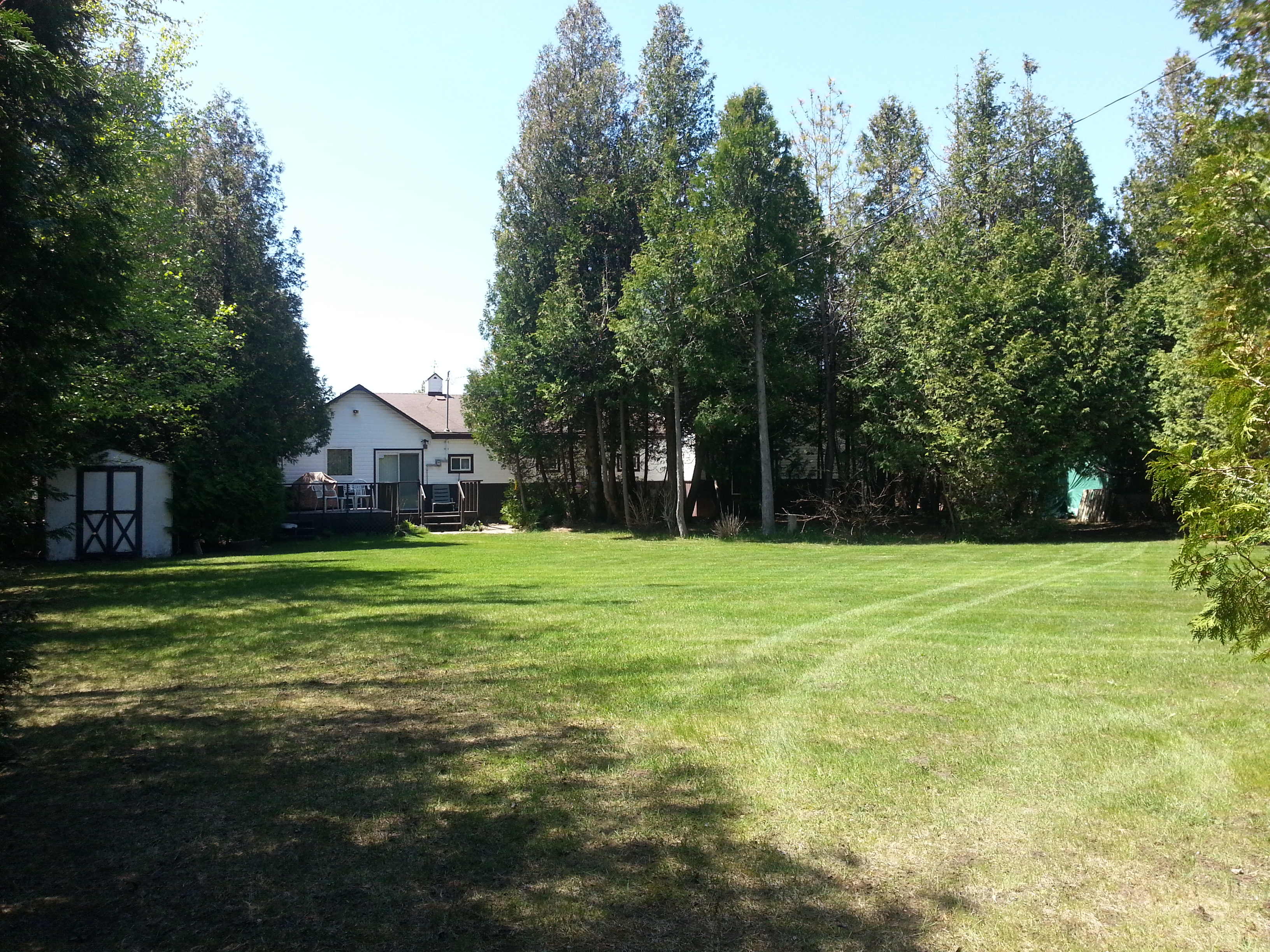Back Yard 3